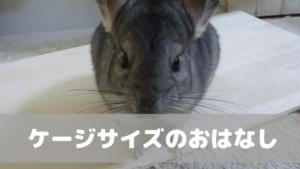 【チンチラ飼育】ケージのサイズは大きい方がいいのか?