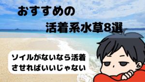 【底床が化粧砂でも大丈夫!】おすすめの活着系の水草8選